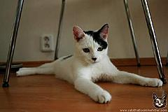 Weekly Comp - The Card Player - 07/03/2010-kitler.jpg
