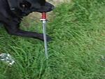 Dog stole my  sword